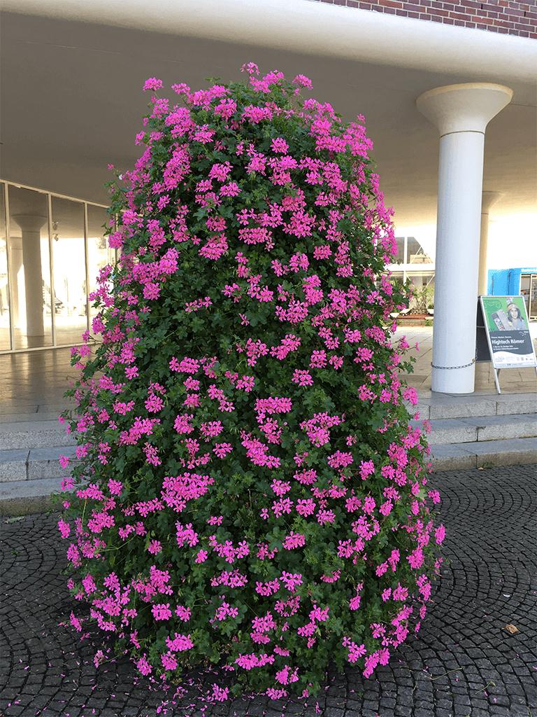 hilversum lila 2