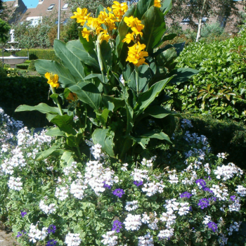 Blumenkästen Typ Sylvie