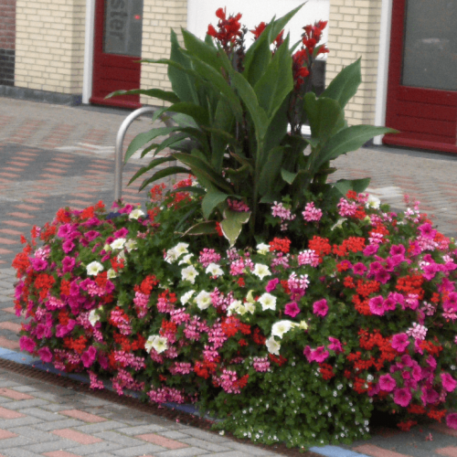 Blumenkästen Typ Zandvoort